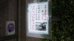 20110503monkey_0297